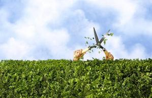 hedge-trimming_1402365i